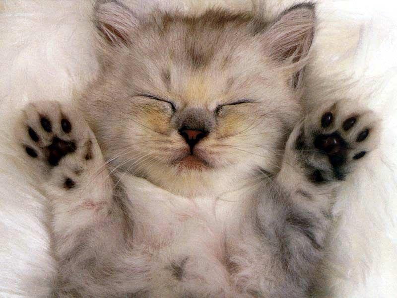 significado sonhar gatos
